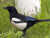 Птица сорок'а